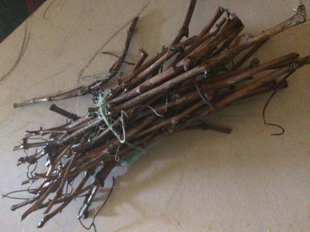 Prairie Fire Winery Chambourcin Cuttings
