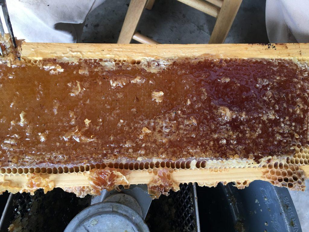 frame-different-pollen