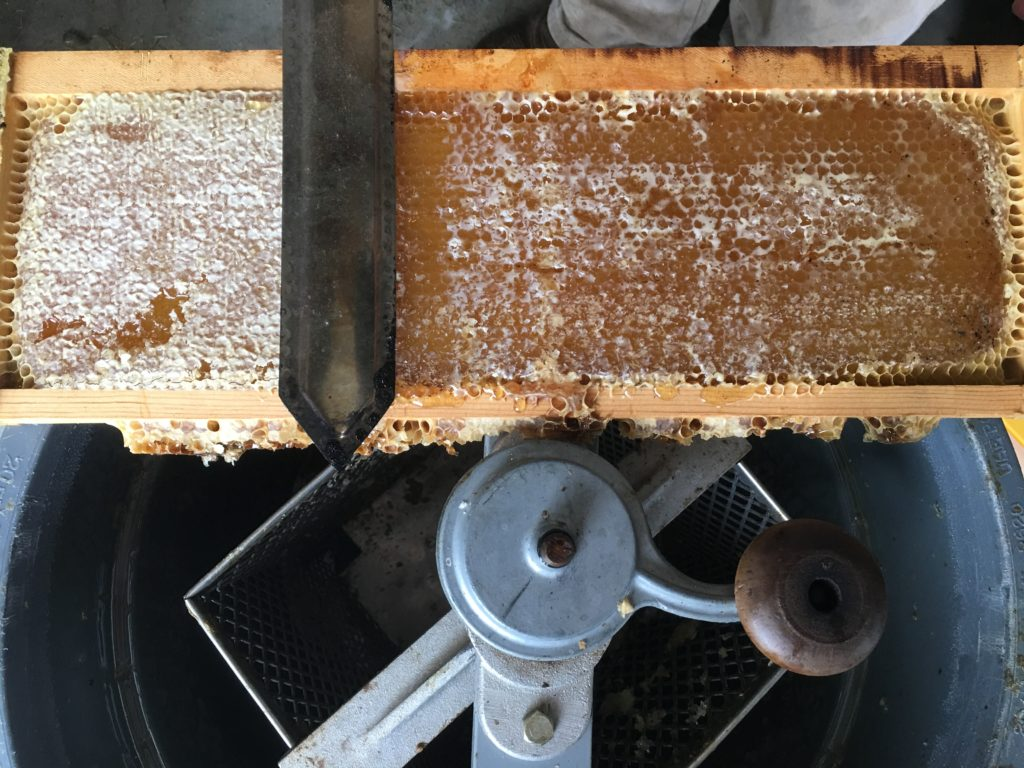 Uncapping Kansas Honey